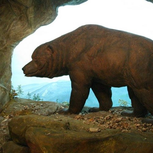 """""""Hedge Fund Liquidation Theory & Sideline $ Sending Bears Back To Cave?"""""""