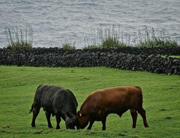 """""""Bulls Appear To Be Grazing Without A Care?"""" or """"It's Deja Vu All Over Again"""""""