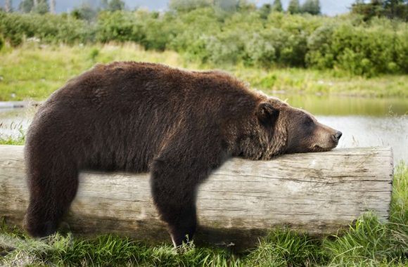 """""""Bears Might Still Be In REM & Not Quite Awake""""  or """"Sell In May Still A Month Away?"""""""
