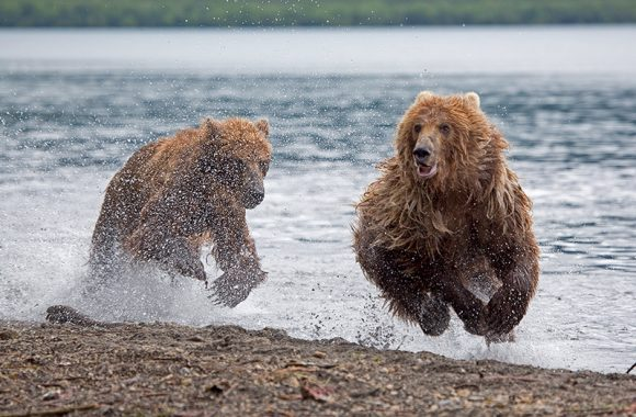 """""""Semi's Have Assumed The Position?"""" or """"Sell In May Finally Works?"""" or """"Bears Begin To Gallop?"""""""